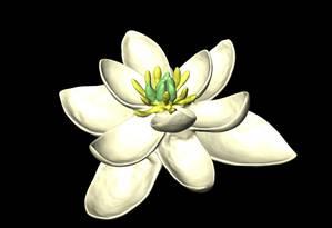 Modelo em 3D da flor ancestral, que deu origem a todas as outras: ela tinha tanto partes femininas (carpelos) quanto masculinas (estames) Foto: Reprodução do estudo