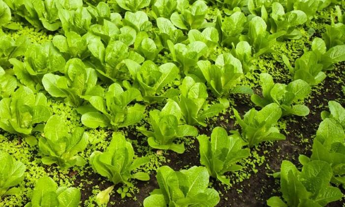 Fazenda orgânica na Bélgica Foto: AFS Intercultura Brasil / Divulgação