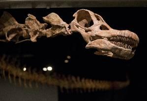 Uma réplica do titanossauro está exposta no Museu Americano de História Natural, em Nova York Foto: Mary Altaffer / AP
