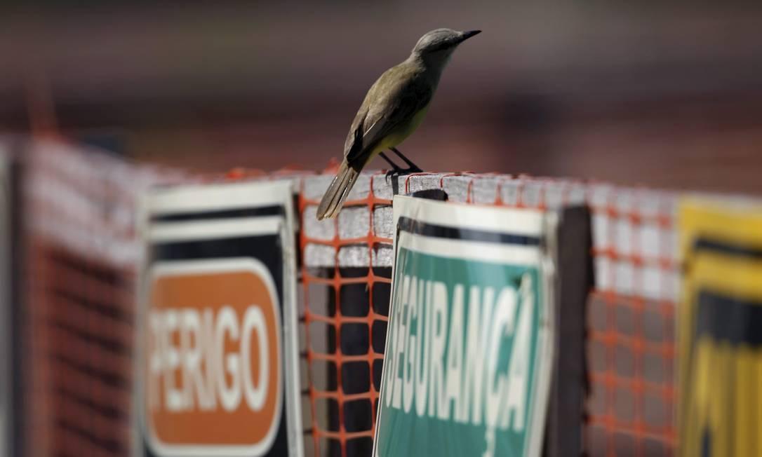 Pássaros Urbanos. Suiriri-cavalheiro Custódio Coimbra / Agência O Globo