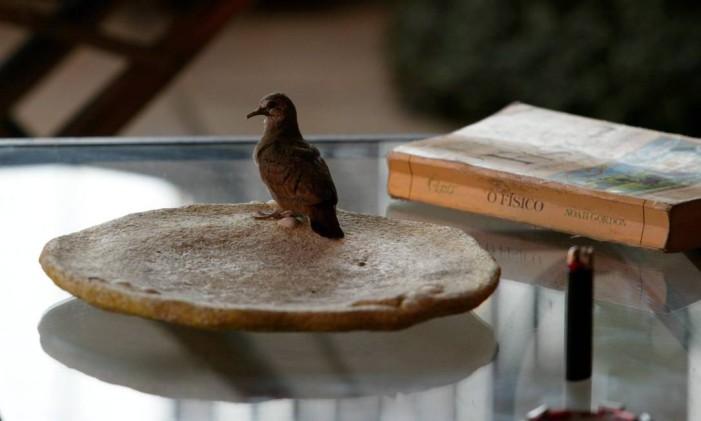 Provavelmente, a Rolinha foi a primeira espécie de ave a se adaptar à vida urbana no Rio Foto: Custódio Coimbra / Agência O Globo