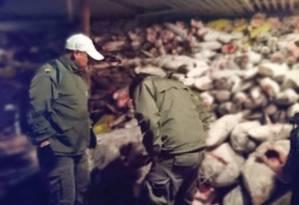 Imagem mostra autoridades do governo vistoriando a carga de 300 toneladas de pescado Foto: MINISTÉRIO DO MEIO AMBIENTE DO EQUADOR