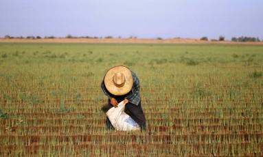 Trabalhador rural em região mexicana próxima à fronteira com os EUA Foto: GUILLERMO ARIAS / AFP