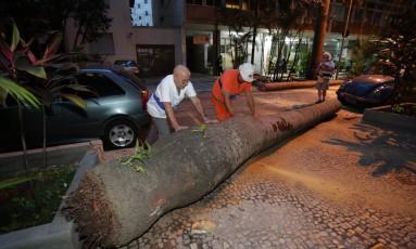 Vento forte derruba palmeira imperial na Rua Paissandu, altura do número 51, no Flamengo Foto: Márcio Alves / Agência O Globo