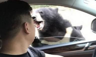 Momento em que o urso avança sobre o visitante do parque Foto: REPRODUÇÃO/WEIBO