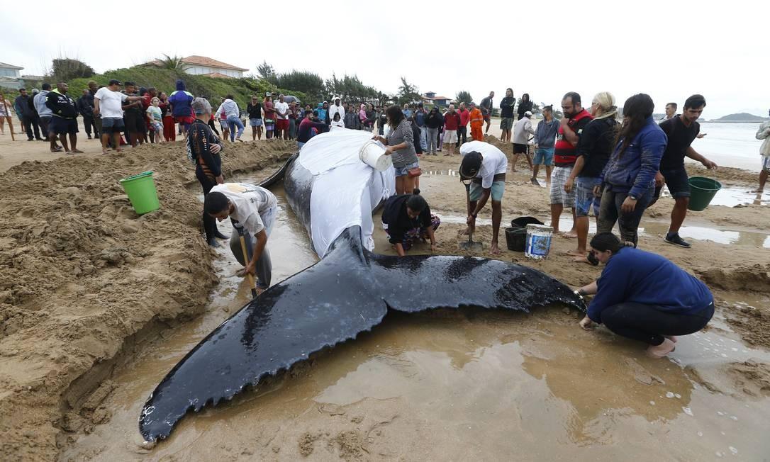 Após a mobilização dos moradores, duas retroescavadeiras privadas foram levadas até a praia para auxiliar no resgate Foto: Pablo Jacob / Agência O Globo