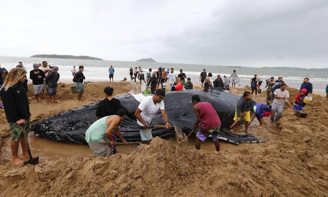 De acordo com uma moradora da cidade, que afirma ser bióloga, o animal deve pesar cerca de 28 toneladas Foto: Pablo Jacob / Agência O Globo