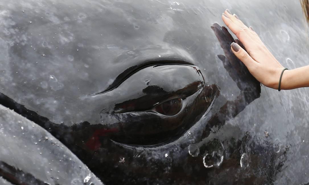 O filhote de baleia jubarte encalhou em Búzios Foto: Pablo Jacob / Agência O Globo