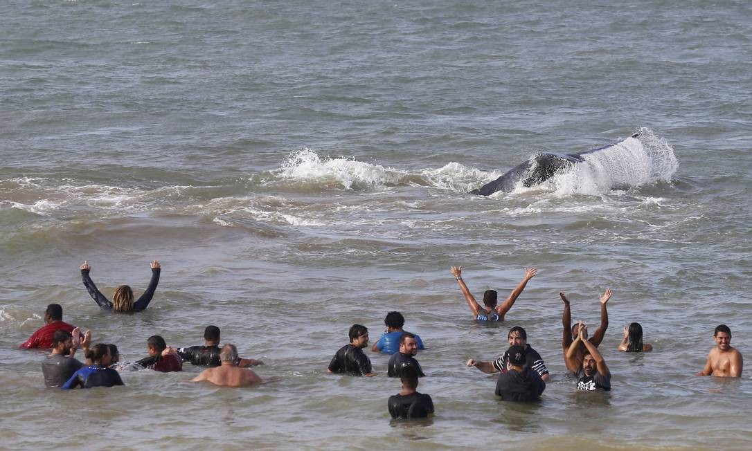 O animal, que pesa cerca de 28 toneladas, retornou para a água Foto: Pablo Jacob / Agência O Globo