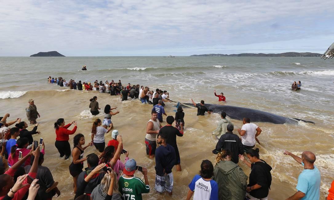 Após 24 horas encalhada na praia Rasa em Buzios a baleia Jubarte consegue se soltar Foto: Pablo Jacob / Agência O Globo