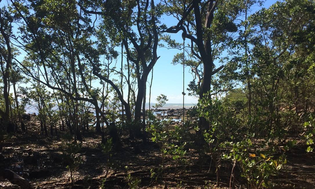 Este tipo de mangue só existe em três locais no mundo: Búzios, Fortaleza e no Japão Foto: Luciane Costa / Luciane Costa