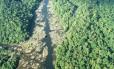 Florestas do Amapá Foto: Conservação Internacional / Agência O Globo