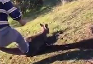 Vídeo mostra momento em que animal é esfaqueado Foto: Reprodução