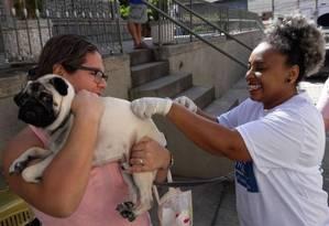 Posto no Rio Comprido recebe cãozinho para vacinação Foto: Divulgação