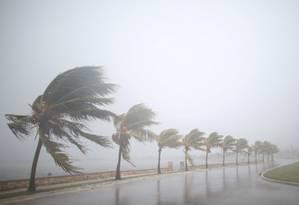 Palmeiras sofrendo com os ventos do Irma em Caibarien, Cuba Foto: ALEXANDRE MENEGHINI / REUTERS
