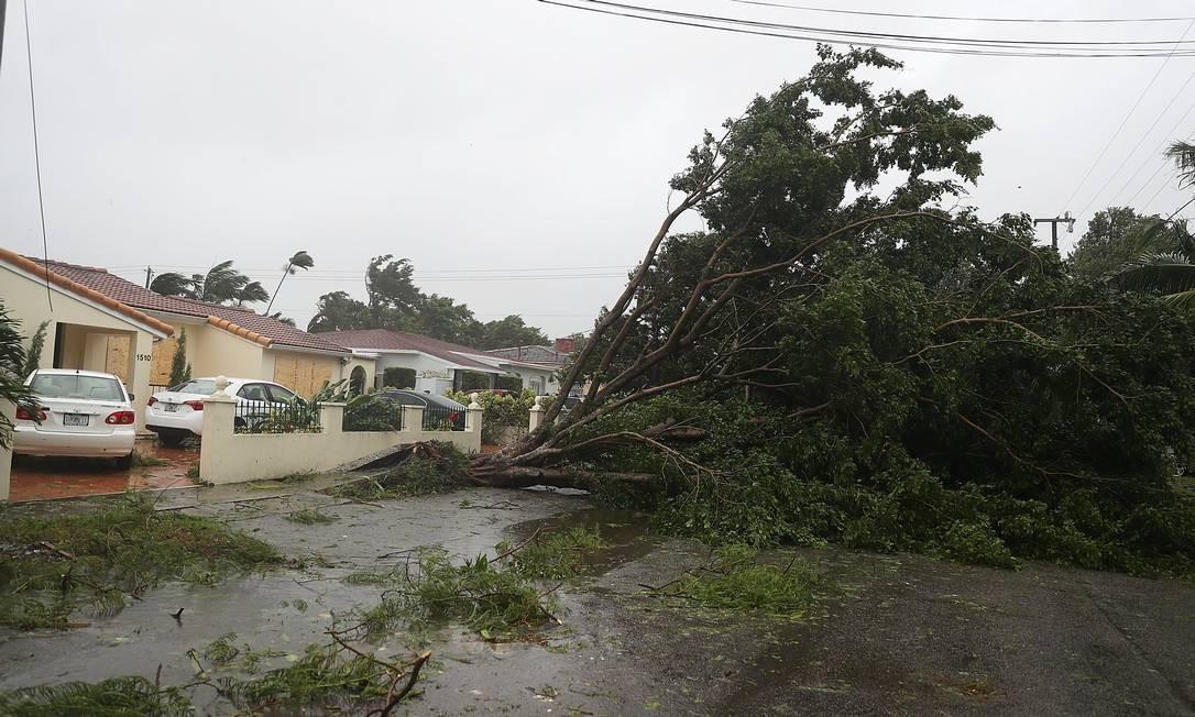 Árvores e galhos foram derrubados pelos ventos fortes antes mesmo da chegada do Irma em Miami Foto: JOE RAEDLE / AFP