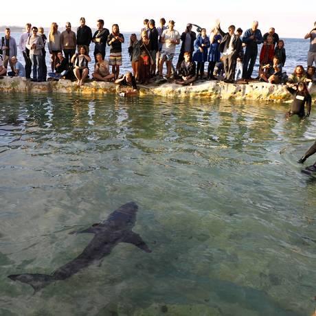Pessoas observam o tubarão colocado na piscina Foto: WILL BURGESS / REUTERS