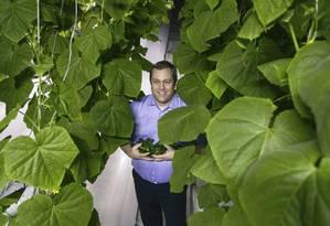 Diretor executivo Joakim Hauge colhe pepinos em estufa no Catar Foto: Divulgação/Copenhagen Film Company/Sahara Forest Project