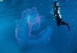 Bióloga identifica estrutura como um conjunto de ovos de uma espécie de lula Foto: FACEBOOK