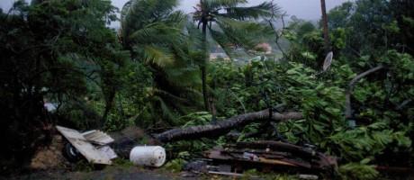 Fortes ventos derrubam árvores na ilha de Guadalupe, na rota do furacão Maria Foto: CEDRIK-ISHAM CALVADOS / AFP
