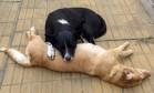 Cão fiel passa a noite velando corpo da companheira Foto: Reprodução/Facebook