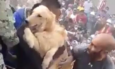 Militares e civis participaram do resgate do animal Foto: Reprodução