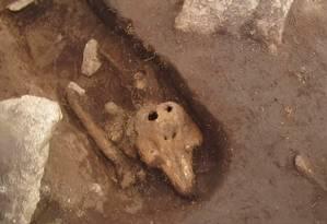 Túmulo em ilha abrigava ossada inesperada: uma toninha Foto: REPRODUÇÃO/YOUTUBE