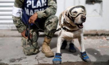 Frida, a cadela que trabalha ajudando os socorristas em terremotos no México Foto: EDGARD GARRIDO / REUTERS