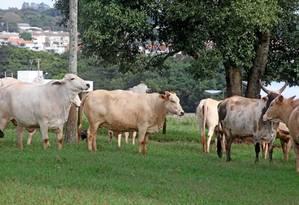 Exportações de carne bovina para a China foram retomadas nesta quinta-feira. Foto: Agência O Globo