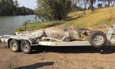 A polícia está investigando a morte do imenso crocodilo Foto: POLÍCIA DE QUEENSLAND