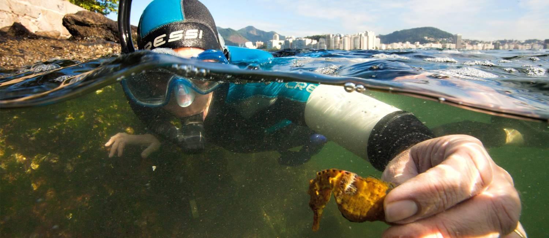 Pesquisadora segura cavalo-marinho perto da Urca Foto: Ricardo Gomes