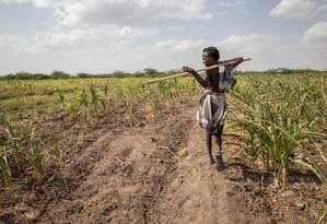 Garoto caminha em plantação perdida por causa da seca na Etiópia Foto: Mulugeta Ayene / AP
