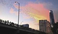 Revoada dos morcegos Foto: Austin CVB/Divulgação