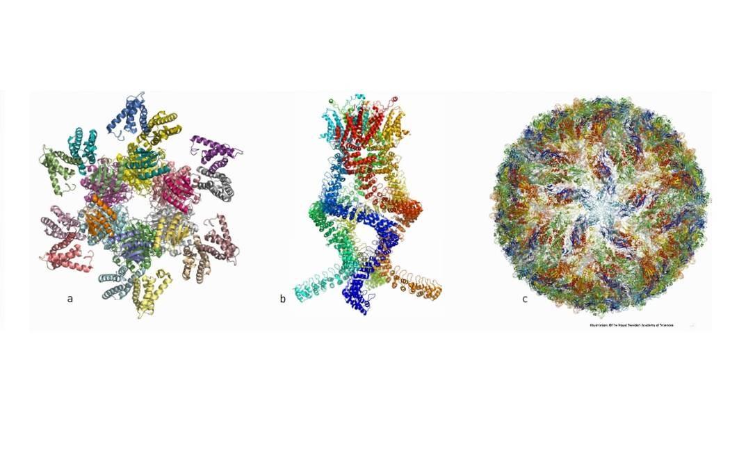 A imagem mostra (a) o complexo de proteínas que regula o ritmo circadiano, (b) sensor que mede alterações na pressão do ouvido e nos permite ouvir e (c) o vírus zika Foto: The Royal Swedish Academy of Sciences