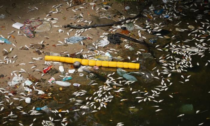 Mortandade de peixes na Baía de Guanabara Foto: Pablo Jacob / Agência O Globo