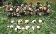 17 filhotes foram apresentados ao público na base de Bifengxia do Centro para a Conservação e Pesquisa do Panga Gigante, na China