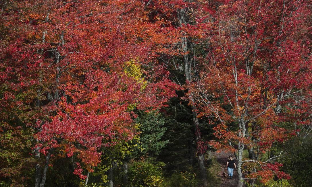 """A temporada é marcada pelas cores fortes que substituem o verde das árvores. Essa parte do Centennial Park, em Moncton, New Brunswick, no Canadá, por exemplo, foi toda """"pintada"""" de vermelho Foto: Darren Calabrese / AP"""