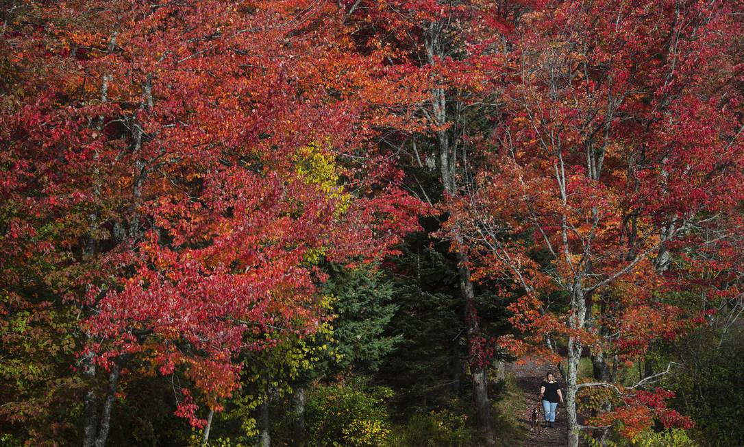 """A temporada é marcada pelas cores fortes que substituem o verde das árvores. Essa parte do Centennial Park, em Moncton, New Brunswick, no Canadá, por exemplo, foi toda """"pintada"""" de vermelho Darren Calabrese / AP"""