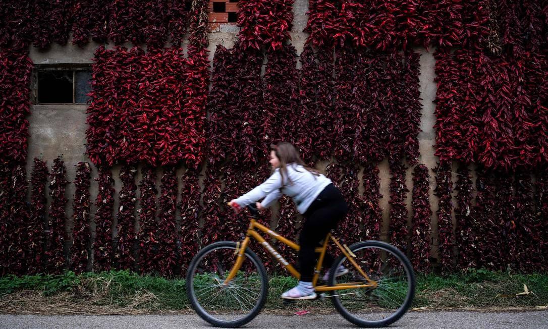 """Uma menina pedala em frente a uma plantação de páprica, que fica ainda mais vermelha no outono, no vilarejo de Donja Lokosnica, no sul da Sérvia, local conhecido como """"capital da páprica"""" ANDREJ ISAKOVIC / AFP"""