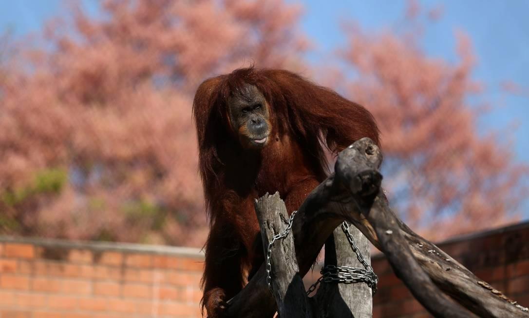 Em breve, o Zoo passará por mais mudanças. Vai virar um bioparque, sem grades e com uso de barreiras naturais para separar bichos de visitantes Foto: Custódio Coimbra / Agência O Globo