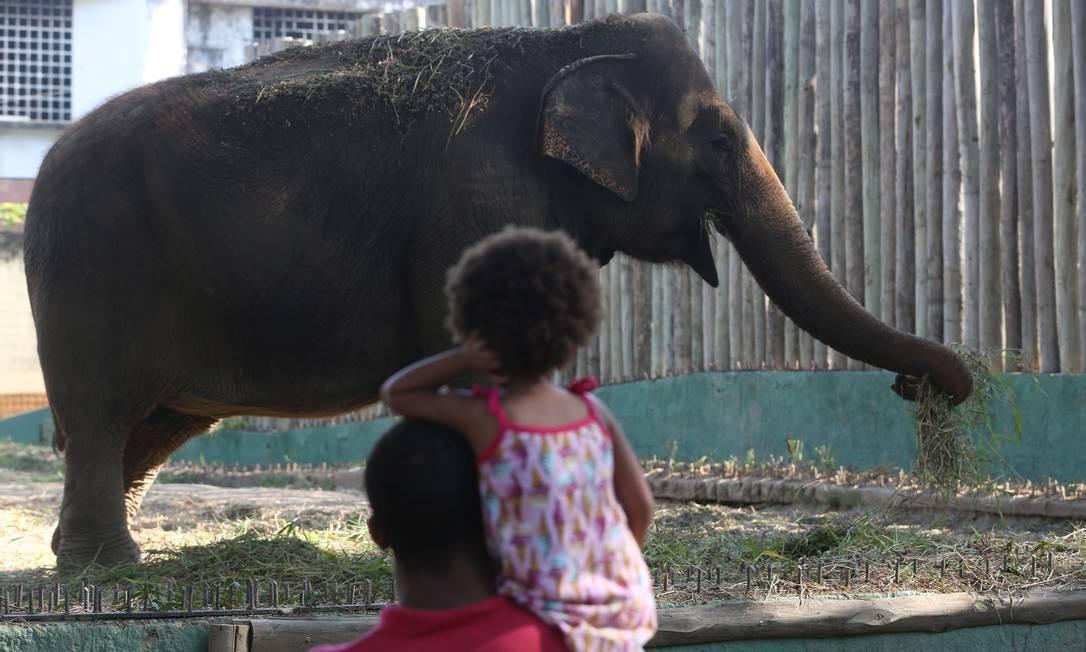 Menina se encanta com a imponência do elefante Foto: Custódio Coimbra / Agência O Globo