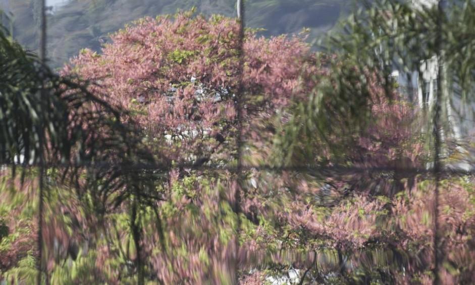 Vidros de janelas refletem a delicadeza das flores Foto: Márcia Foletto / Agência O Globo