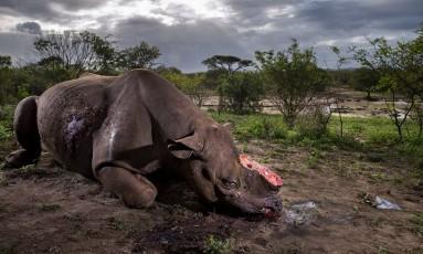 """A grande vencedora na categoria adulto foi a imagem """"Memorial to a Species"""", por Brent Stirton, da África do Sul, que mostra um rinoceronte abatido por caçadores por causa do chifre. A fotografia também foi a vencedora da categoria """"Story"""". Foto: Brent Stirton/NHM"""