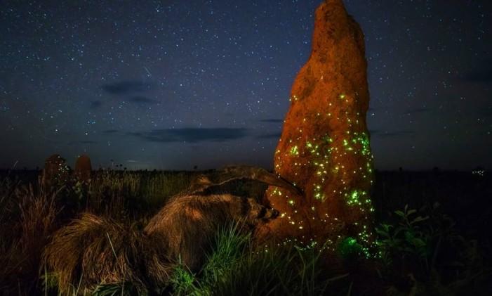 """O Brasil foi representado por Marcio Cabral e sua obra """"The Night Raider"""", vencedora da categoria """"Animais em seus ambientes"""". A fotografia mostra cupins bioluminescentes sendo devorados por um tamanduá no Parque Nacional das Emas, em Goiás. Foto: Marcio Cabral/NHM"""