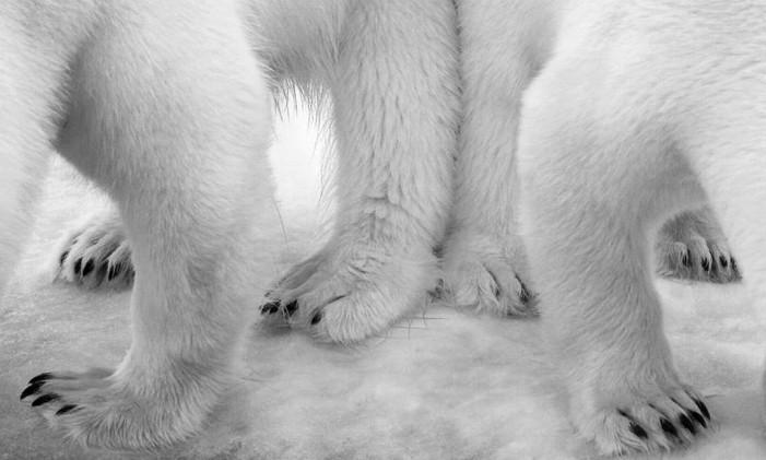 """A obra """"Polar Pas de Deux"""", de Eilo Elvinger, de Luxemburgo, venceu a categoria """"Preto e branco"""" com a imagem das patas dois ursos polares no Ártico norueguês. Foto: Eilo Elvinger/NHM"""