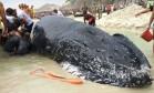 Uma baleia encalhou no canto da Praia Grande, em Arraial do Cabo Foto: Dayana Resende/ Agência O GLOBO