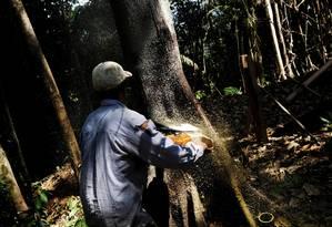 Homem usa serra elétrica para derrubar árvore em Itaituba, no Pará Foto: NACHO DOCE / REUTERS