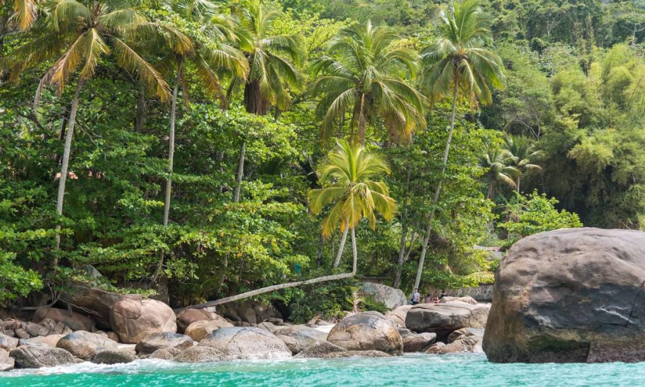 O famoso coqueiro dobrado da Praia do Aventureiro, um dos pontos mais isolados da ilha e que fica dentro de uma reserva ambiental Foto: Alex Ferro / Agência O Globo