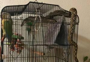 Pássaro ficou petrificado com a cobra em sua gaiola Foto: REPRODUÇÃO/Melvin Yap
