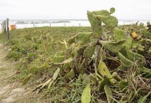 Trecho da Praia do Recreio onde a cerca foi destruída Foto: Agência O Globo / Brenno Carvalho